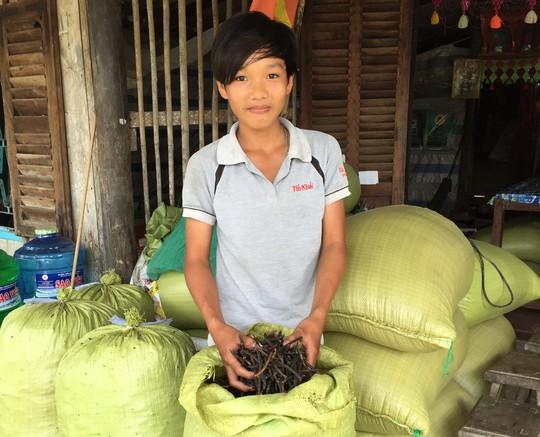 Chỉ cần trồng 1 vụ đậu xanh mùa khô hạn là một hộ dân ở Khánh Bình Tây đủ sống cả năm