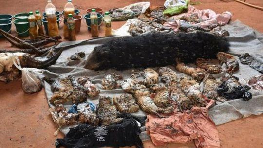 Nhà chức trách Thái Lan nói số xác động vật này được lưu trữ trái phép tại chùa. Ảnh: Reuters