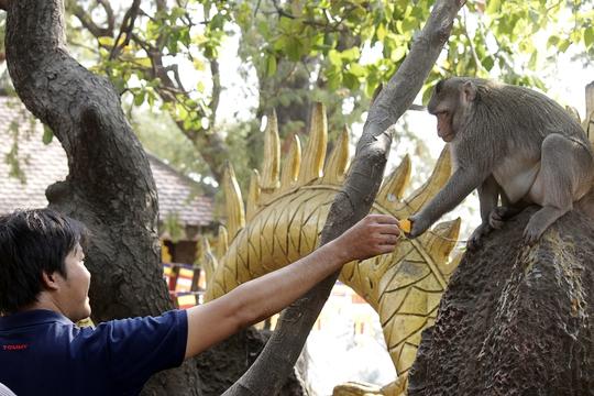 Nhiều khách tham quan chùa thích thú cho những chú khỉ thân thiện và dạn dĩ thức ăn.