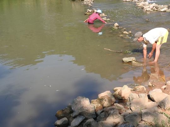 Người dân ra sông Bưởi vớt cá khi xuất hiện tình trạng cá chết hàng loạt