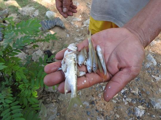 Cá tự nhiên chết hàng loạt trên sông Bưởi, nước đổi màu nhưng nguyên nhân vì đâu vẫn chưa được làm rõ