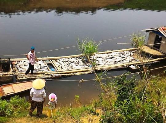 Cá chết trắng lồng trên sông Bưởi đoạn qua xã Thành Vinh, huyện Thạch Thành