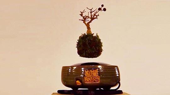 Trồng cây bonsai bay lơ lửng trên không