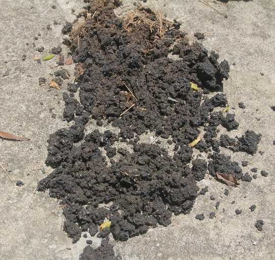 Bùn có màu đen ở bãi rác rất giống với chất thải phát hiện tại trang trại của ông Lê Quang Hòa ở TX Kỳ Anh