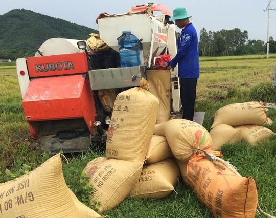 Muốn gặt lúa trên các cánh đồng ở huyện Yên Thành, tỉnh Nghệ An, chủ các máy gặt phải nộp tiền bảo kêẢnh: Nghĩa Đàn
