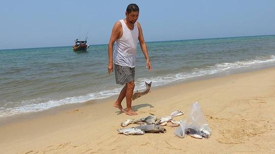 Đến trưa cùng ngày, nước nhạt dần và xuất hiện cá chết