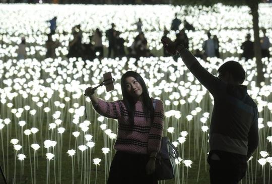 Khu vườn thu hút nhiều người đến chụp ảnh: Ảnh: AP