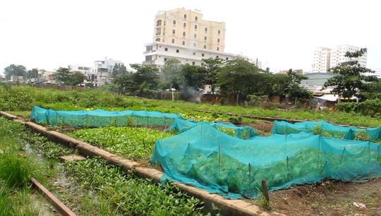 Người dân trồng rau, nuôi gà trong dự án treo