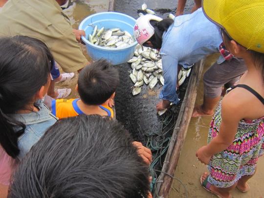 Thu gom cá nuôi bị chết tại thị trấn Thuận An