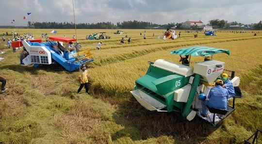Muốn đưa khoa học công nghệ vào sản xuất nông nghiệp cần phải có cánh đồng lớn ẢNH: CÔNG HÂN