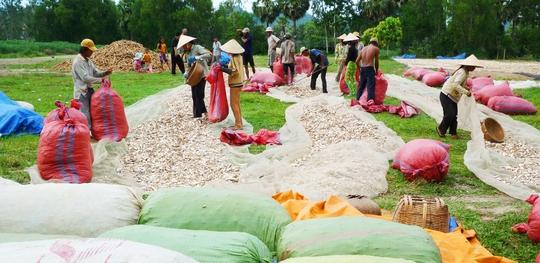 Vùng đất núi khô hạn ở An Giang đã chuyển sang trồng cây khoai mì để chủ động được nguồn nước tưới tiêuẢnh: THỐT NỐT