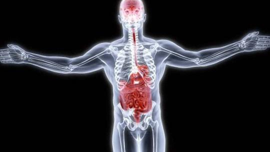 Nhiều nghiên cứu mới nêu khả năng vi khuẩn đường ruột ảnh hưởng đáng kể đến hoạt động của hệ thần kinh Ảnh: PRI