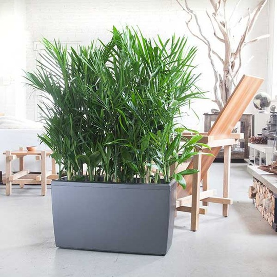 7 loại cây thanh lọc không khí nên trồng trong nhà