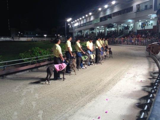 Các chú chó được đưa vào vị trí chuẩn bị cho một cuộc đua tại TP Vũng TàuẢnh: Phạm Bá Tèo