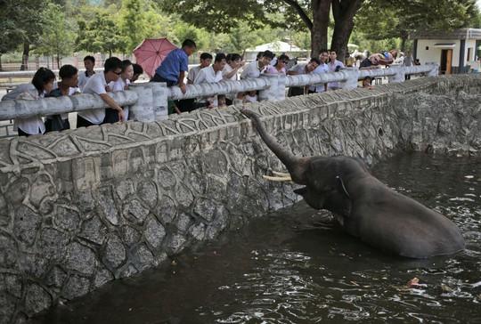 Một nhóm khác thì lại cho voi ăn. Ảnh: AP