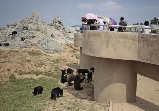 Du khách thích thú ngắm nhìn gấu. Ảnh: AP