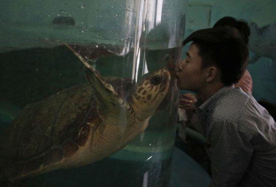 Một người đàn ông hôn rùa thắm thiết. Ảnh: AP