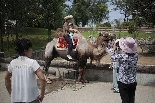Du khách tạo dáng chụp hình cùng lạc đà. Ảnh: AP