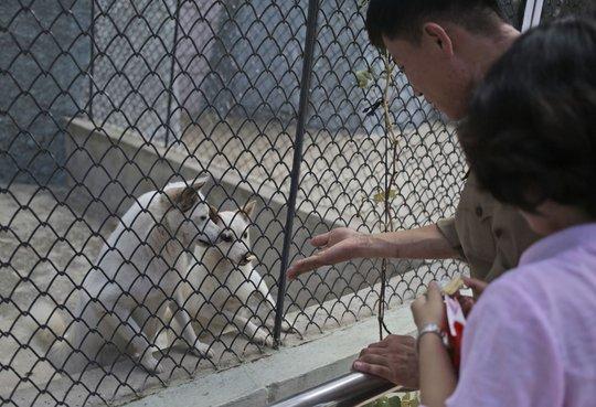 Tại vườn bách thú Bình Nhưỡng, chó mới là ngôi sao chứ không phải loài khác. Ảnh: AP