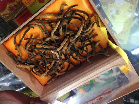 Đông trùng hạ thảo có giá 40 triệu đồng/ kg. Ảnh: Thái Nguyễn
