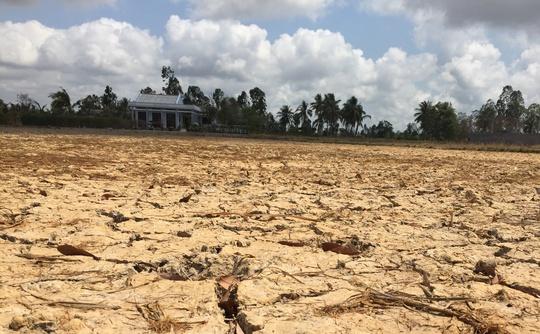 Tình trạng khô, mặn đang báo động ở đồng bằng sông Cửu Long