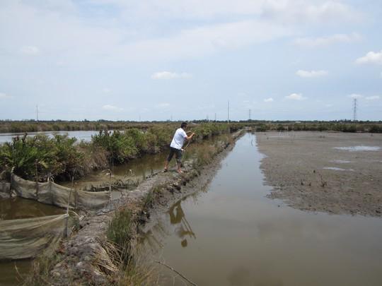 Nước mặn xâm nhập khiến việc trồng lúa của người dân Cà Mau trở nên khốn đốn. Nhiều diện tích đất phải bỏ không