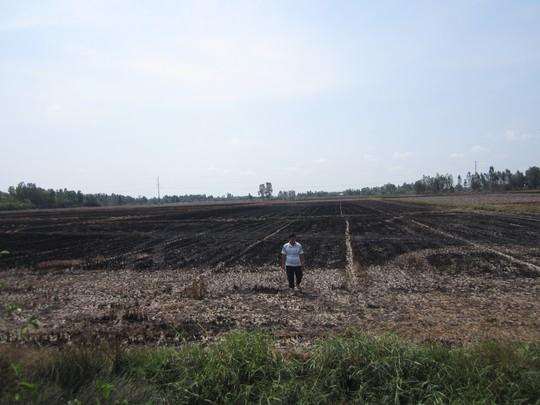 Nhiều cánh đồng ở Bạc Liêu, Cà Mau trở nên khô cháy vì hạn.