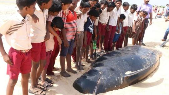 Người dân địa phương cố gắng giải cứu lũ cá voi. Ảnh: BBC