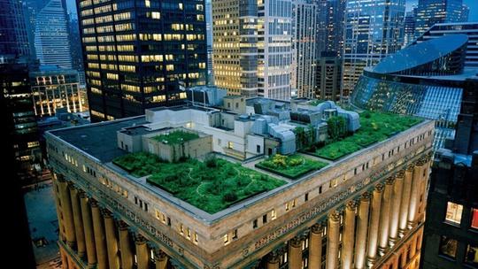 Tòa thị chính Chicago (Mỹ) có phần mái nhà được quy hoạch thành các khoảng cây xanh mướt và cả khu nuôi ong.