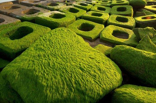Rêu xõa dài trên các mảng bê tông
