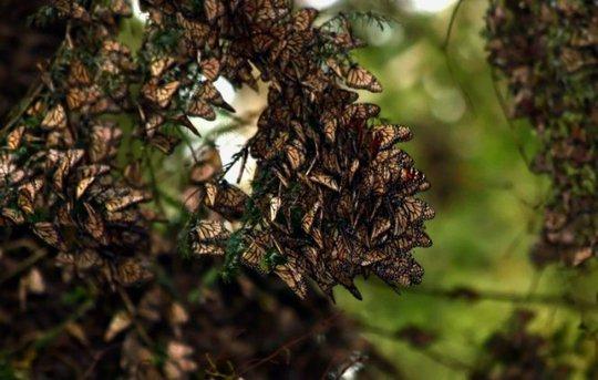 Rừng bướm thiên nhiên đang bị đe dọa và hủy hoại nghiêm trọng - Ảnh: Odditycentral