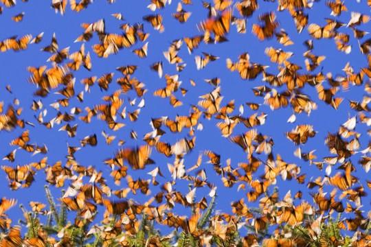 Cánh rừng bướm tuyệt đẹp đang cần sự chung tay bảo vệ của nhiều người - Ảnh: Odditycentral