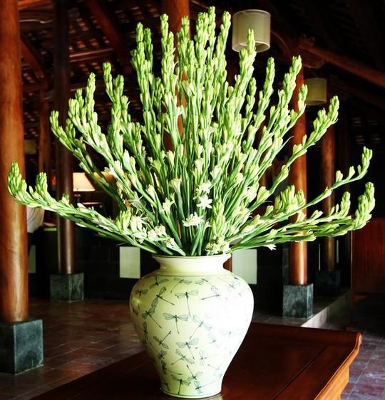 Hoa huệ ta thích hợp cúng trên bàn thờ gia tiên.