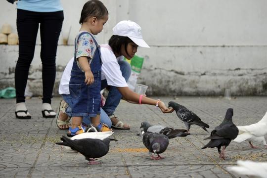 Các em nhỏ thích thú khi được bố mẹ dẫn đi dạo và cho bồ câu ăn tại khu vực công viên 30-4.