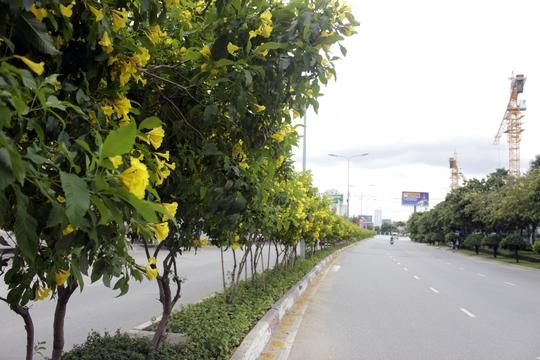Đường Nguyễn Hữu Cảnh (quận Bình Thạnh) rực rỡ sắc hoa vàng