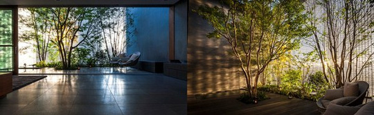 Ngôi nhà có thiên nhiên xanh mát ngay trong nhà