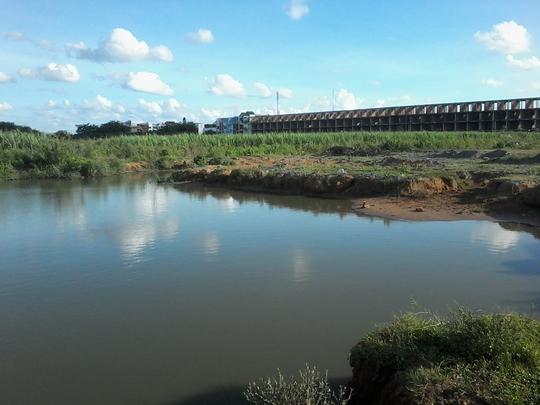 Hàng loạt khu dân cư bỏ hoang ở TP Cần Thơ là nơi lý tưởng để rắn lục đuôi đỏ sinh sống và phát triển. Ảnh: Công Tuấn