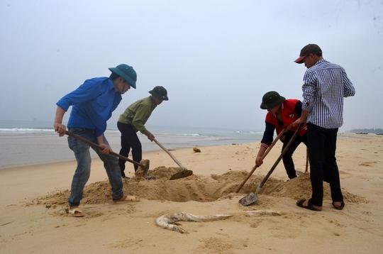Đoàn viên, thanh niên đã ra quân làm sạch bờ biển Quảng Trị, sáng 29-4 (ảnh Hà Lợi)