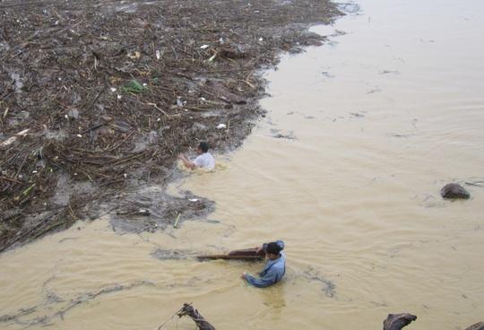 Người dân liều mình vớt củi trên sông Lam ở Nghệ An khi nước lũ đổ về. Ảnh: ĐỨC NGỌC