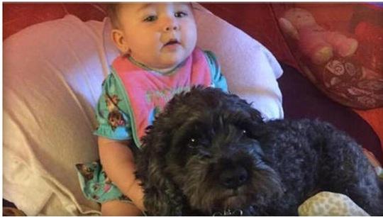 Viviana và chú chó Polo. Ảnh: CBS News