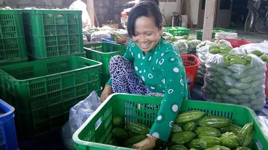 Mạnh dạn trồng rau sạch đã đem lại thu nhập ổn định cho nông dân - Ảnh: H.N