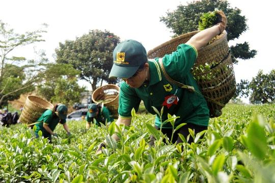Lâm Đồng buộc dừng Lễ hội trà vì hoạt động không hiệu quả.