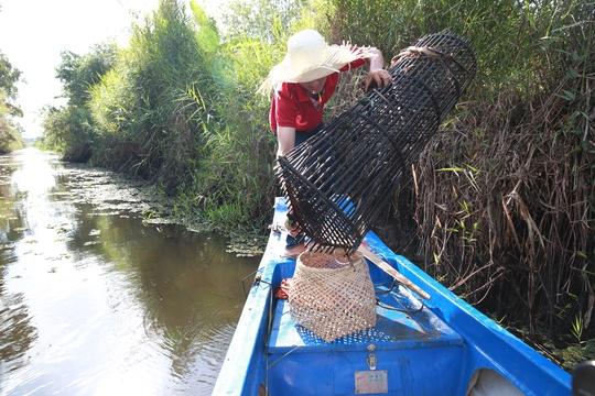 Du khách trải nghiệm đặt lọp bắt cá rừng U Minh Hạ