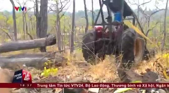 Hình ảnh trong phóng sự điều tra phá rừng ở Đắk Lắk của VTV - Ảnh cắt từ clip