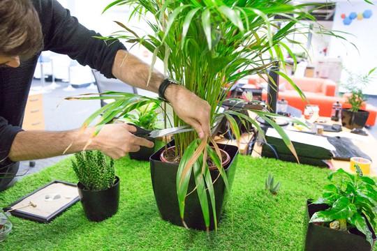 Việc cắt tỉa cây cũng đủ giúp bạn giải tỏa căng thẳng vài phút khi rời xa bàn làm việc.