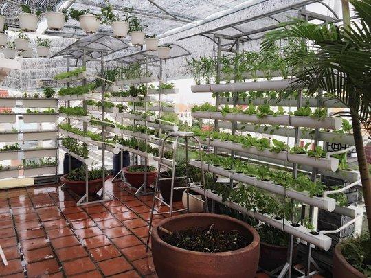 Vườn rau sạch trên sân thượng đáng ngưỡng mộ của siêu mẫu.