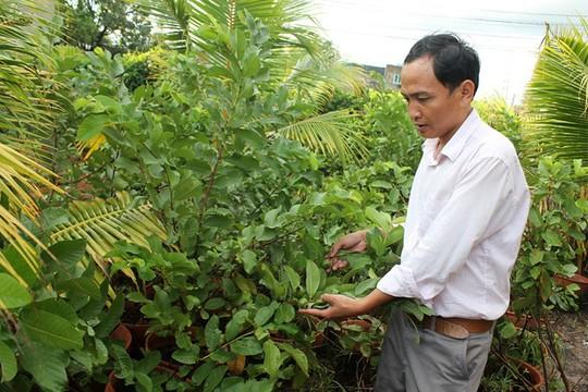Anh Nguyễn Chí Cường, bên vườn ổi trồng trong chậu đang ra trái chuẩn bị phục vụ cho khách tham quan. Ảnh: Zen Nguyễn.