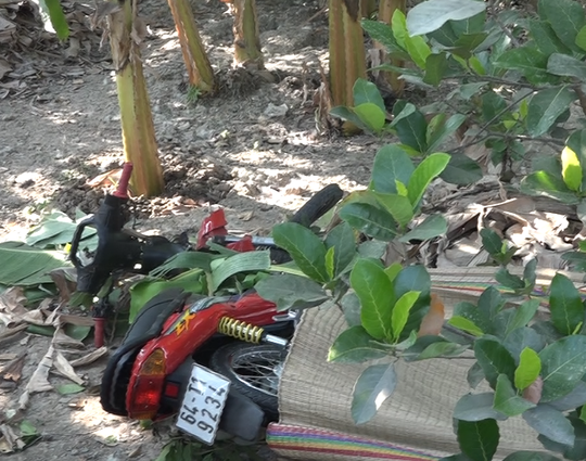 Chiếc xe máy của N. trong vườn chuối của người dân.