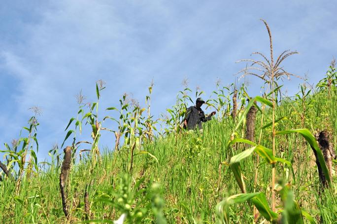 Dù trở về sau hơn 2 năm sống ở rừng nhưng anh Hồ Văn Lang vẫn giữ được sự nhanh nhẹn, thoăn thoắt trên những sườn đồi