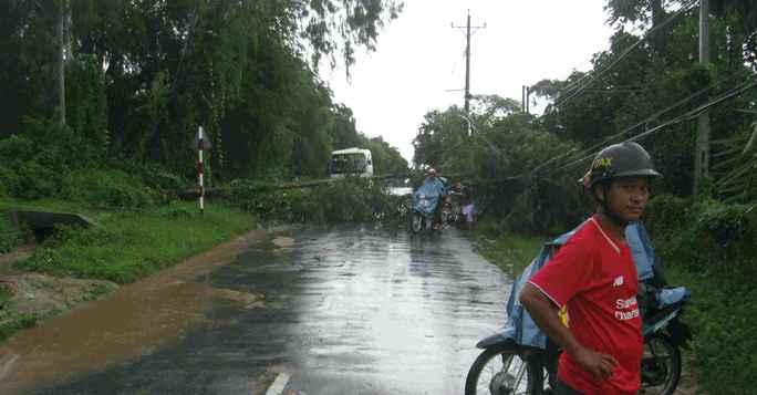 Cây cối ngã ngang Tỉnh lộ 984 khiến giao thông bị ách tắc nhiều giờ